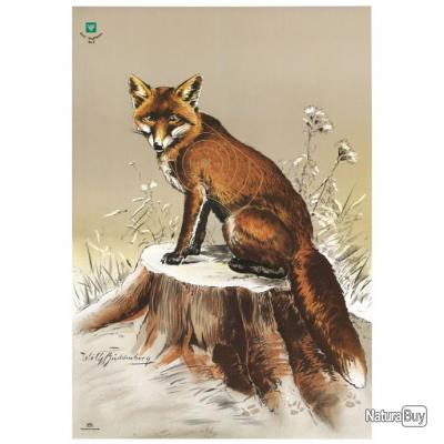 Cible de chasse, renard
