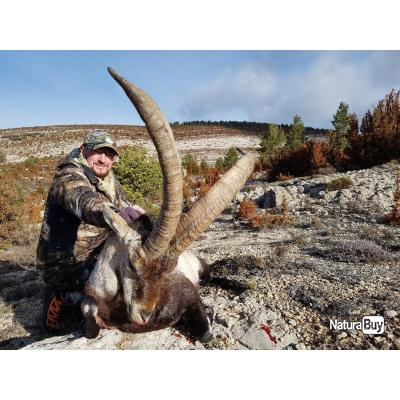 l'ibex de Beceite en Espagne