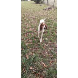Chien Courant Griffon AtooDog Pull Sweat de Chasse