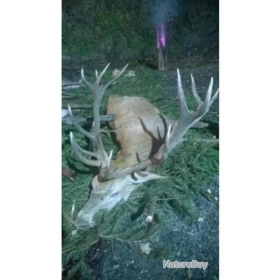 Le cerf en hiver avec PROHUNT