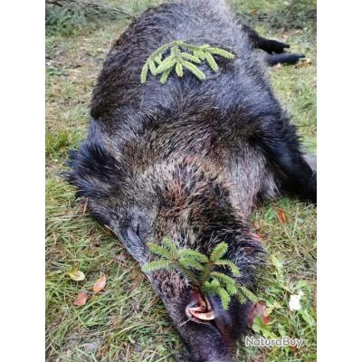 La chasse du sanglier de nuit en Pologne avec PROHUNT