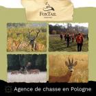 BROCARDS (4 prix) EN POLOGNE 2021 + sanglier gratuit