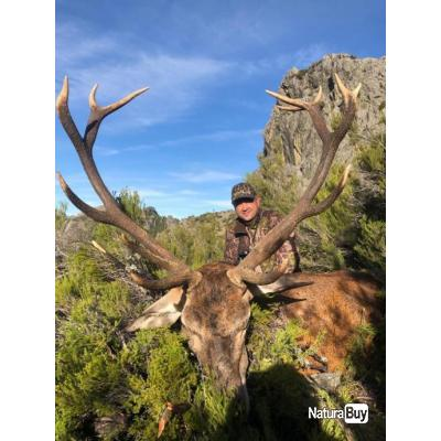 APPROCHE CERF 12/14 pointes ESPAGNE