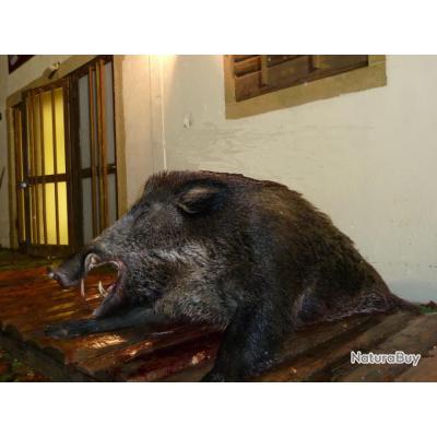 Cherche ARCHER pour chasse dans SUD  MEUSIEN 630 €