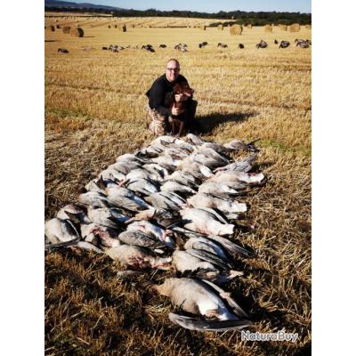 Séjour de chasse aux oies et canards en Ecosse