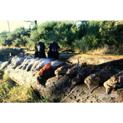 Séjour de chasse mixte en Ecosse