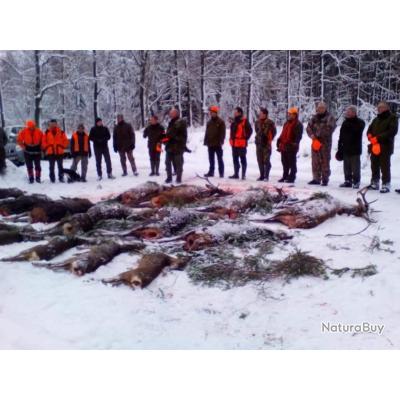 chasse en  battues en Pologne avec un monde de chasse