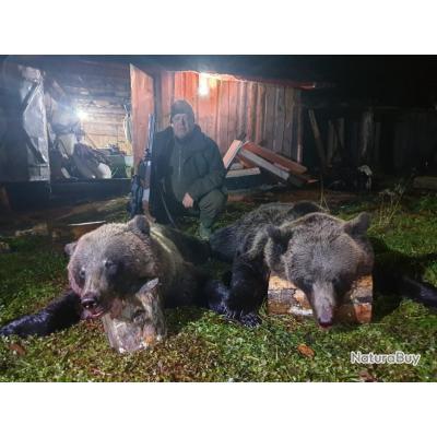 chasse de l'ours brun en Russie avec Un Monde de Chasse