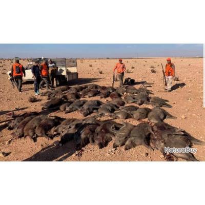 Et Pourquoi pas essayer la chasse du sanglier au Maroc?
