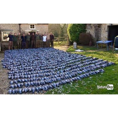 Chasse du pigeon ramier en Irlande .