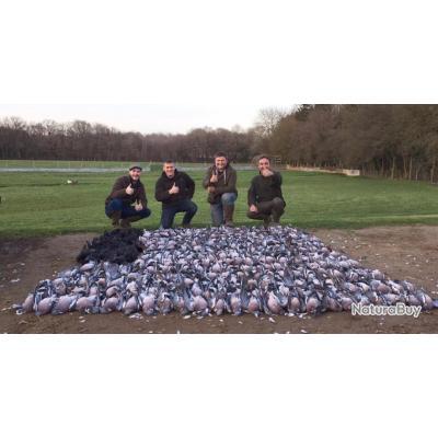 Chasse du pigeon ramier en Angleterre .