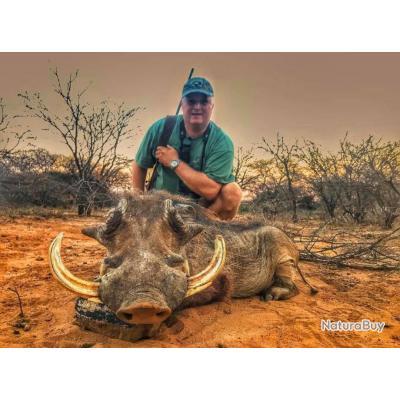 Chasse du phacochère dans le Limpopo / Package 7 animaux .