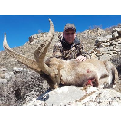 la chasse de l'ibex de Beceite en Espagne
