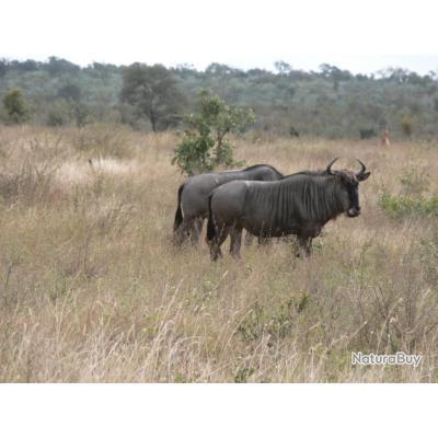 AFRIQUE DU SUD - PACKAGE TROPHEES  - PROMO 2020