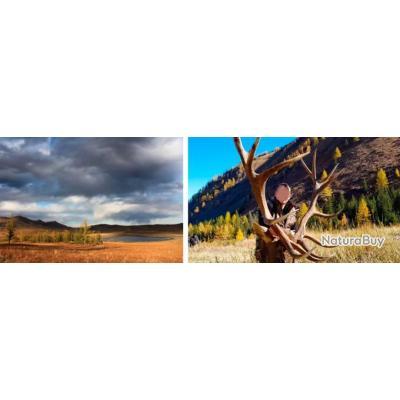 Mongolie : Cerf Maral