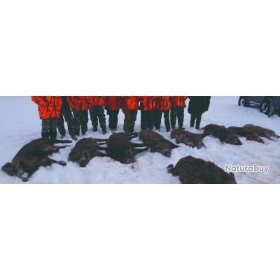 Roumanie : Chasse du sanglier en battue