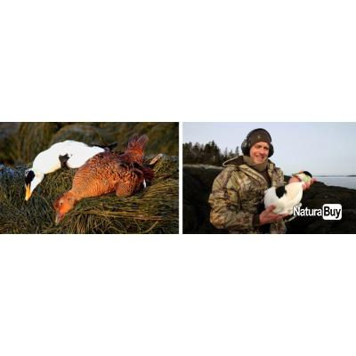Canada : Chasse aux canards polaires