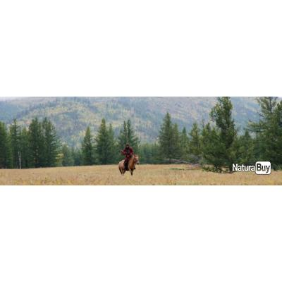Mongolie : Chasse des tétras et perdreaux