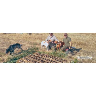 Roumanie : Caille au chien d'arrêt