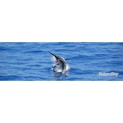 Rodrigues : Paradis de la multi-pêche
