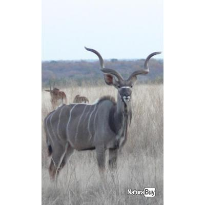 AFRIQUE DU SUD - SAFARI A LA CARTE -15% - PROMO 2020