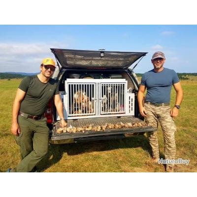Séjour chasse de la caille en Bosnie