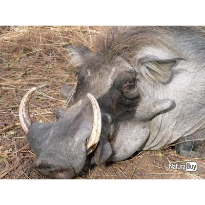 voyage de chasse au RELAIS FLEURI en Casamance