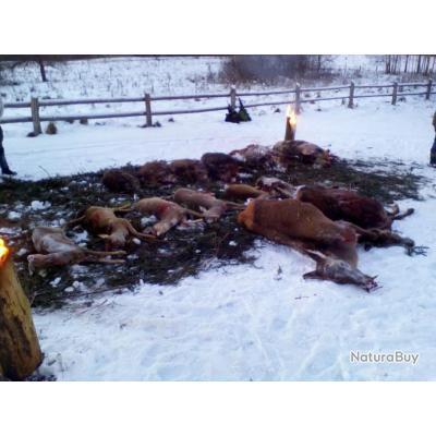 La chasse en battue avec l'agence Prohunt