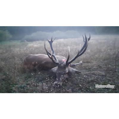La chasse du cerf au brame en Pologne avec PROHUNT