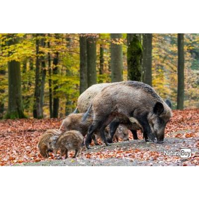 Chasse gros gibiers Sarthe
