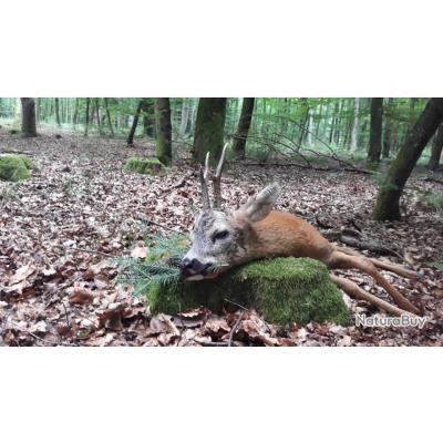 La Chasse du brocard avec un monde de chasse