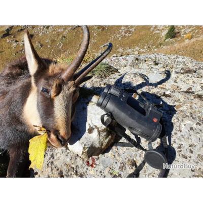 Chasse du chamois dans les Alpes avec un monde de chasse
