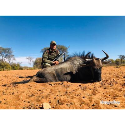 SAFARIE EN NAMIBI JUILLET AOUT SEPTEMBRE